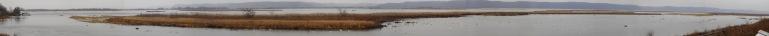 131117.TundraSwans.BrownsvilleMNCROP