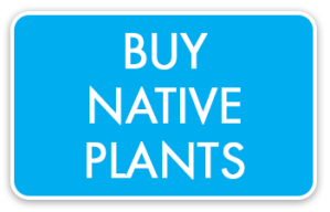 200505_Beewise_Wordpress_buy-native-plants-button